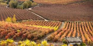 Los vinos de Rioja Alavesa dan a conocer su singularidad