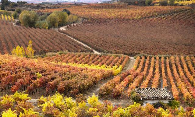 Paisaje de Rioja Alavesa