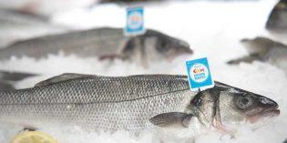 """Pescados de acuicultura """"Crianza de nuestros mares"""": libres de anisakis"""