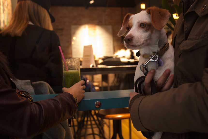 Perro en un bar
