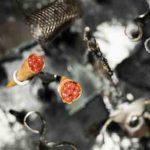 Cornetes de bacalao a la llauna, de Jordi Herrera (Manairó)