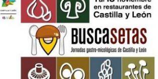250 restaurantes de Castilla y León participan en las jornadas micológicas Buscasetas 2018