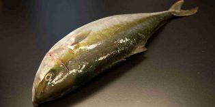 Los exclusivos pescados y mariscos Arrom para la alta restauración
