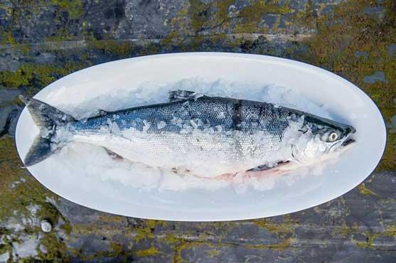 Profesionalhoreca. salmón salvaje de Alaska