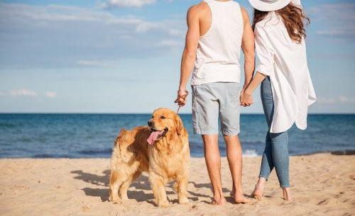 profesionalhoreca, viajes dog-friendly, viajar con perro